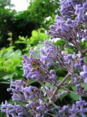 nosara garden